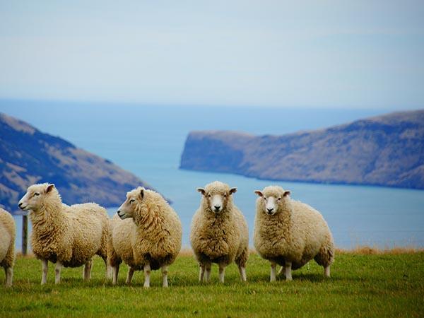 ニュージーランド ETA (NZeTA)