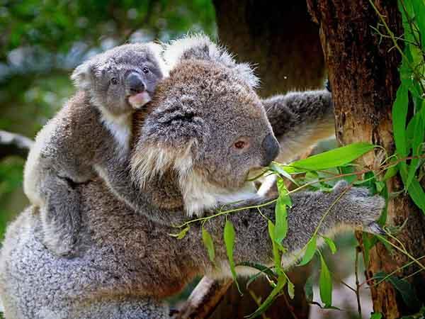 オーストラリアの森林火災に関する報告